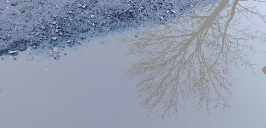 Nature Photography. A strip of stony mud with a huge murky puddle bearing the reflection of a tall, bare-branched tree.